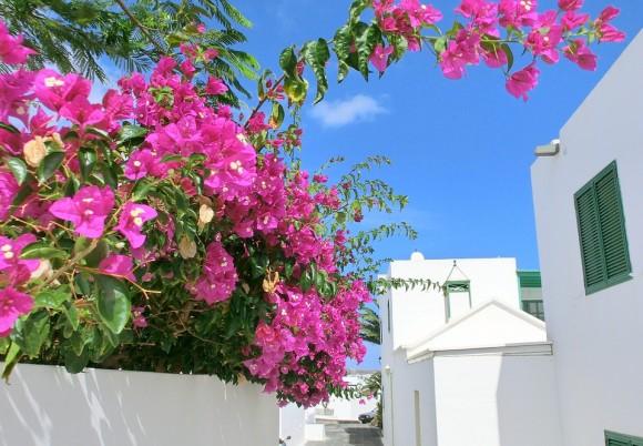 Lanzarote Blommor