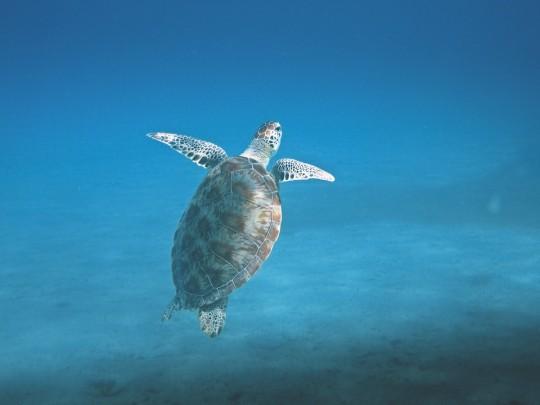 Snorkling Teneriffa Tenerife